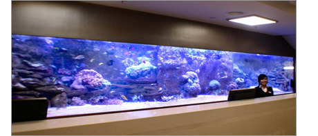 Hotel reception aquarium
