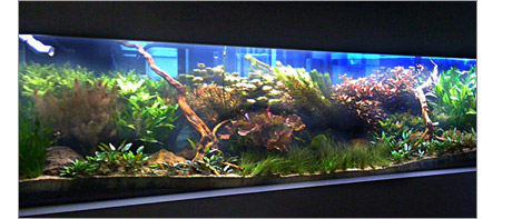 Fresh water planted aquarium